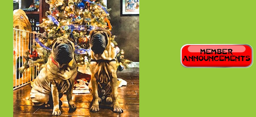 ChristmasHomepageSlider8